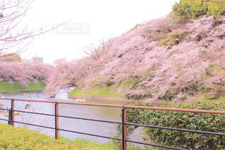 自然,空,花,春,桜,木,屋外,湖,ピンク,ボート,綺麗,水面,山,草,美しい,樹木,新緑,フェンス,桃色,草木,眺め,桜の花,フローラ