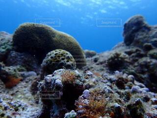 自然,動物,魚,水族館,水面,葉,山,岩,水中,ダイビング,珊瑚礁,コーラル,海洋無脊椎動物,海洋生物学