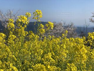 花,屋外,黄色,景色,樹木,草木