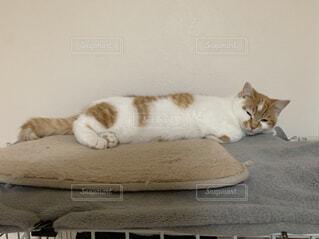 猫,動物,屋内,白,景色,オレンジ,子猫,ネコ科