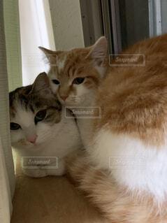猫,動物,屋内,白,かわいい,オレンジ,子猫,座る,探す