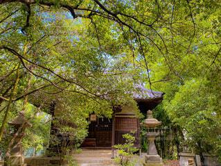 自然,森林,神社,朝,日中,スピリチュアル