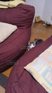 猫,室内,ねこ,ペット,遊び,特技,もってこい,犬芸,変わった芸