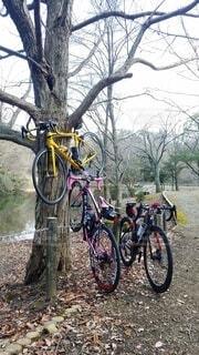自転車,屋外,駐車場,樹木,サイクリング,車両,ホイール,スポーツ用品,陸上車両,自転車のホイール
