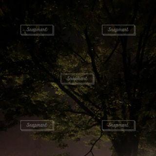自然,夜,森林,屋外,暗い,星,樹木