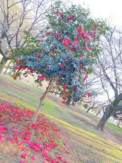 花,屋外,草,樹木,草木