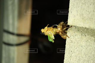 花,動物,屋内,緑,蜂,昆虫,蝶,爬虫類,両生類,草木,グッズ,害虫