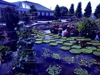 自然,風景,屋外,湖,水面,池,樹木,休日,植物園,草木