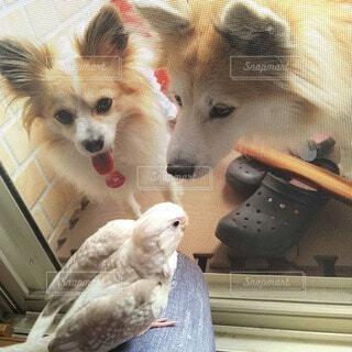 犬,動物,オカメインコ