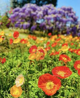 春の写真・画像素材[4498407]