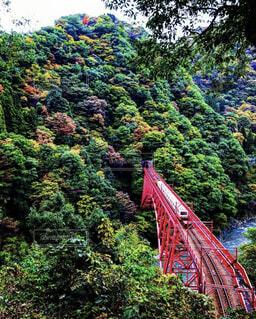 自然,風景,秋,橋,絶景,紅葉,森林,屋外,電車,景色,樹木,列車,渓谷,秘境,富山,草木,黒部峡谷,トロッコ,峡谷,トロッコ電車,紅橋