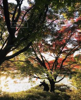 自然,公園,紅葉,赤,もみじ,景色,光,コントラスト,草木