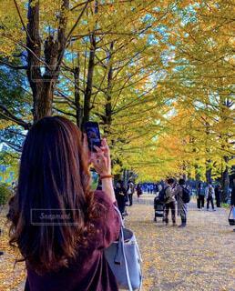 女性,風景,公園,秋,紅葉,屋外,樹木,人物,人,イチョウ,銀杏,デート