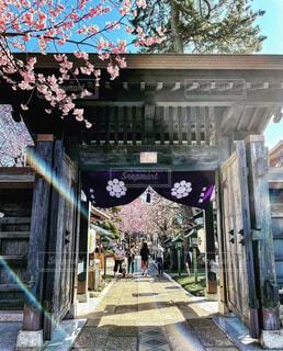 空,建物,花,春,桜,屋外,青空,光,お寺,寺院