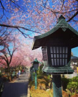 空,春,桜,屋外,ピンク,青空,桜並木,樹木,灯篭,お寺,寺院,灯籠