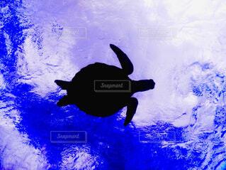 夏,魚,屋外,青,水族館,沖縄,泳ぐ,水中,宮古島,カメ,ウミガメ,ダイビング,シュノーケル,爬虫類