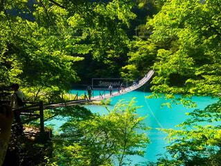 風景,森林,屋外,緑,水面,景色,樹木,新緑,エメラルドグリーン,吊り橋,秘境,吊橋,遊び場,草木,夢の吊り橋,寸又峡