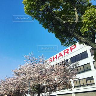 sharpの写真・画像素材[439205]