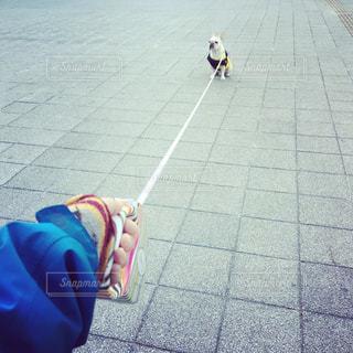 犬の写真・画像素材[447741]