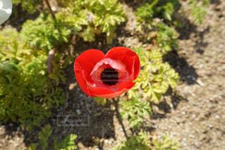 花の写真・画像素材[539010]