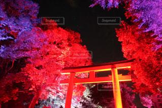 神社の写真・画像素材[539015]