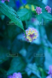 花,雨,葉,梅雨,6月
