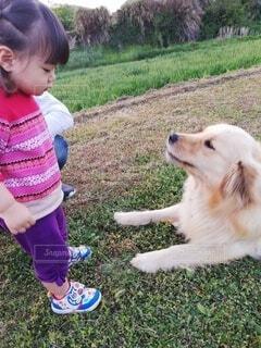 犬,動物,屋外,かわいい,散歩,草,人物,人,おすわり,お姉ちゃん,しつけ,同級生,少し,ゴールデンリトリバー