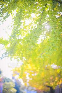 空,秋,樹木,カエデ