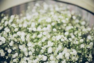 花,屋内,緑,草木