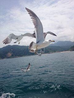 海,空,動物,鳥,屋外,湖,水面,飛ぶ,水鳥,海鳥