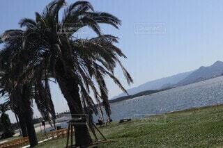 自然,風景,空,屋外,湖,ビーチ,水面,草,樹木,ヤシの木,草木,パーム