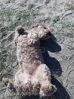 犬,動物,屋外,砂浜