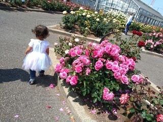 花,屋外,散歩,バラ,子供,バラ園,幸せ,地面,こども,農園,優雅,アンジェラ,フリル