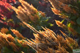 秋,植物,赤,黄色,葉,影,鮮やか,光,大自然,夕陽,草木,繊細