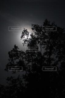 自然,空,屋外,暗い,霧,樹木,月