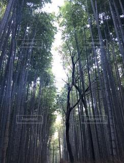 自然,屋外,樹木,竹,草木