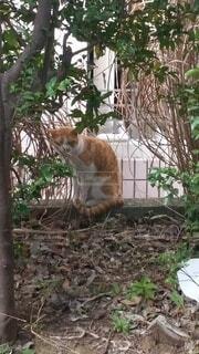 猫,風景,動物,屋外