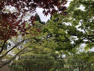 空,春,秋,紅葉,木,屋外,枝,葉,樹木,新緑,旅行,旅,イベント,初夏,ライフスタイル,草木,梅雨前