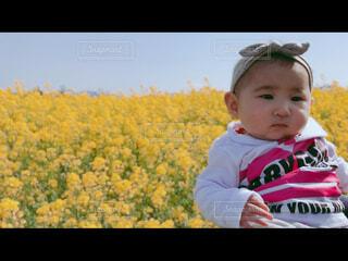 子ども,風景,花,きれい,綺麗,菜の花,女の子,人物,人,赤ちゃん,幼児,少年,畑,キレイ
