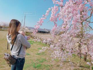 家族,風景,花,桜,屋外,きれい,女の子,草,人物,人