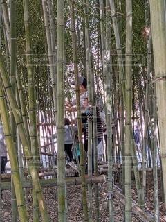 屋外,竹,竹林,遊び