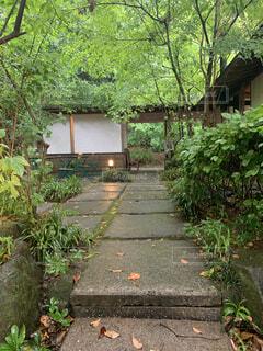 屋外,家,樹木,地面,草木,裏庭