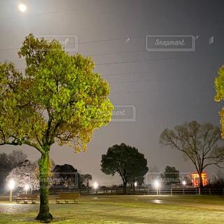 風景,空,屋外,草,樹木,街路灯