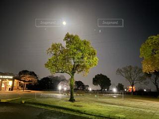 空,夜,屋外,草,樹木,月,明るい