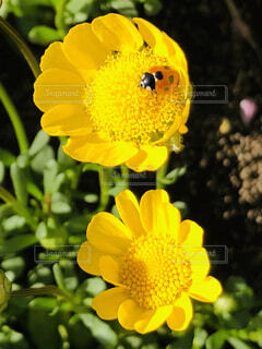 花,春,虫,てんとう虫,虫と花