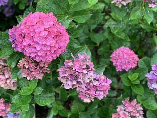 花,屋外,草木,ガーデン,フローラ