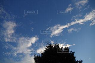 自然,空,屋外,雲,樹木