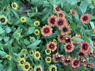 花,屋外,草,草木