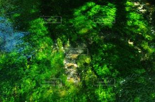 自然,屋外,森,緑,川,水面,葉,山,光,樹木,苔,水中,上高地,草木,透明度,きれいな水