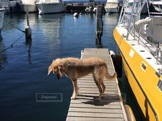 犬,動物,屋外,ボート,船,水面,港,ドック